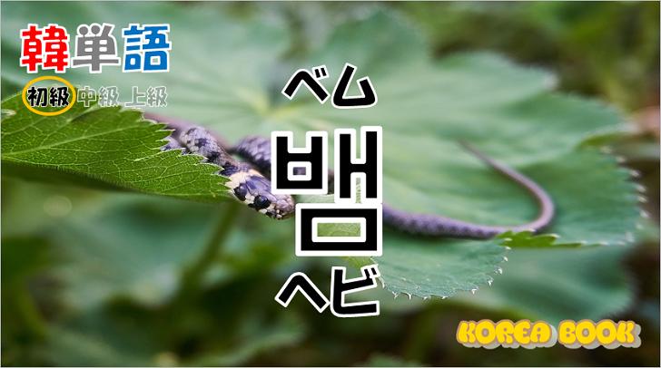 韓国語単語「뱀」を解説