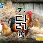韓国語単語「닭」を解説
