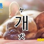 韓国語単語「개」を解説