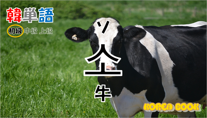 韓国語単語「소」を解説
