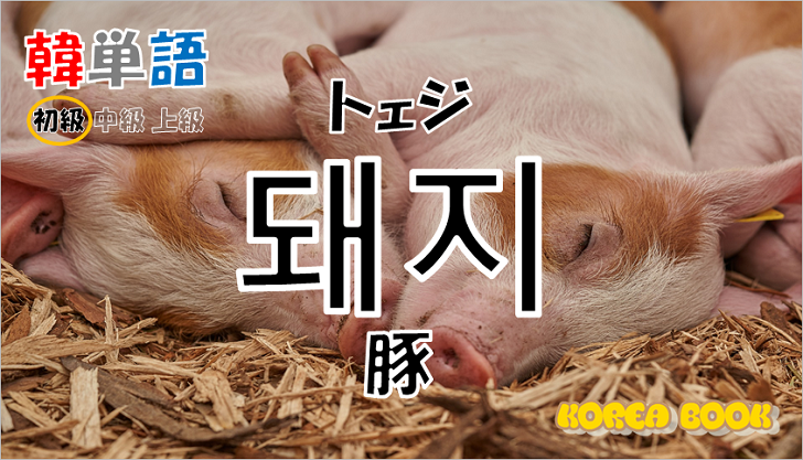 韓国語単語「돼지」を解説