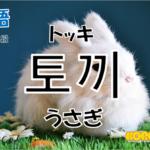韓国語単語「토끼」を解説