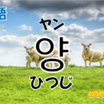韓国語単語「양」を解説