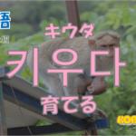 韓国語単語「키우다」を解説