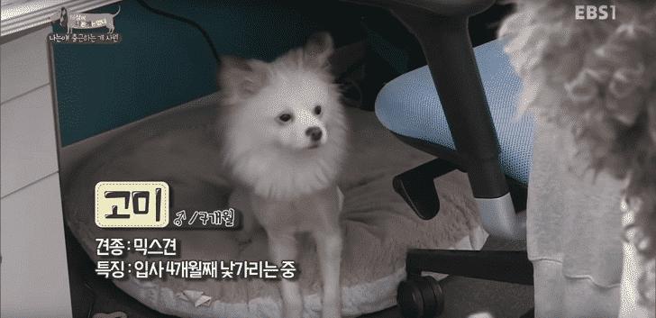 「ミックス犬7か月|コミ」