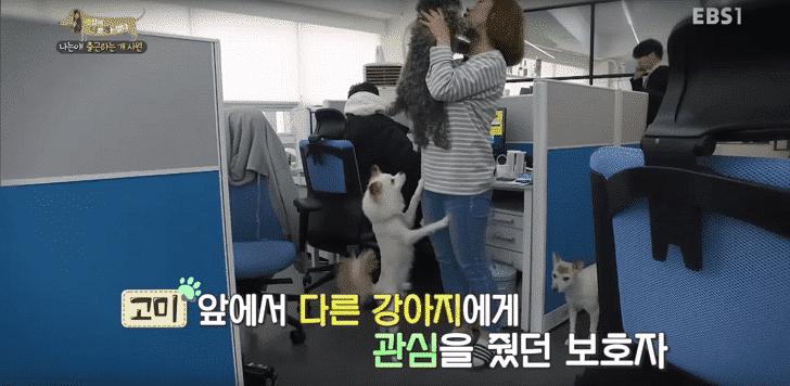 コミの飼い主が他の犬をかわいがることで、コミの警戒心を刺激