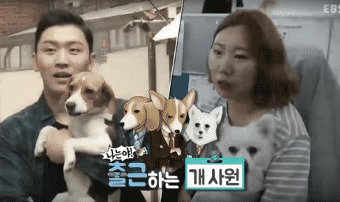 すごい!韓国の犬のしつけ方【世界に悪い犬はいない】~私は出勤する犬~